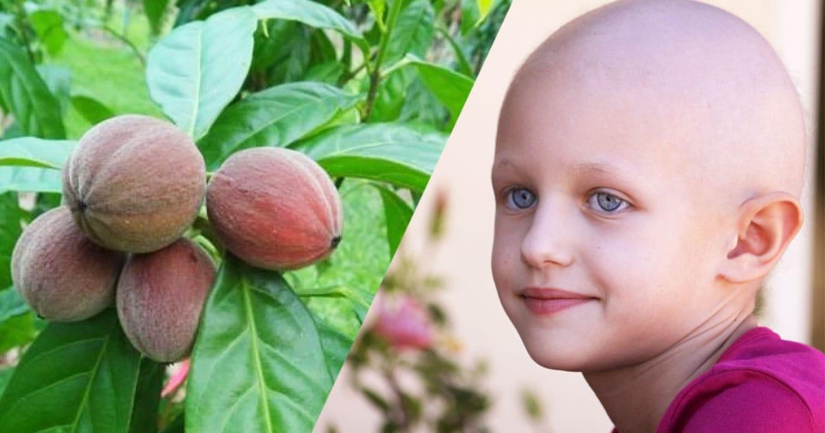graines-soigner-cancer-une